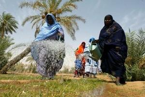 Mauritanie : prise en charge par l'état des intrants agricoles pour assurer la réussite de la campagne