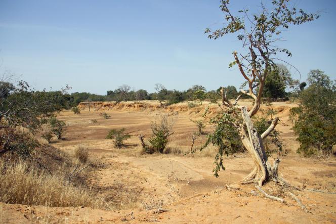 Sahel : la Grande Muraille verte relancée lors du One Planet Summit
